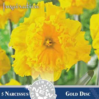 Narzisse - Narcissus Gold Disc